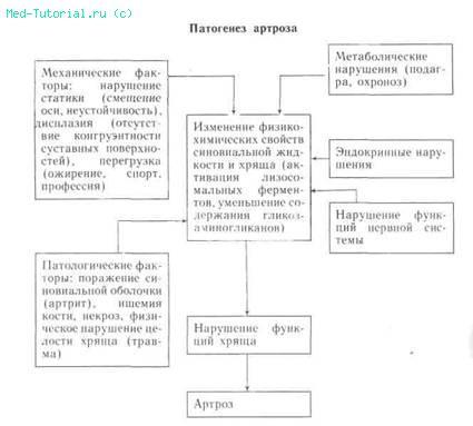 путь развития остеоартроза